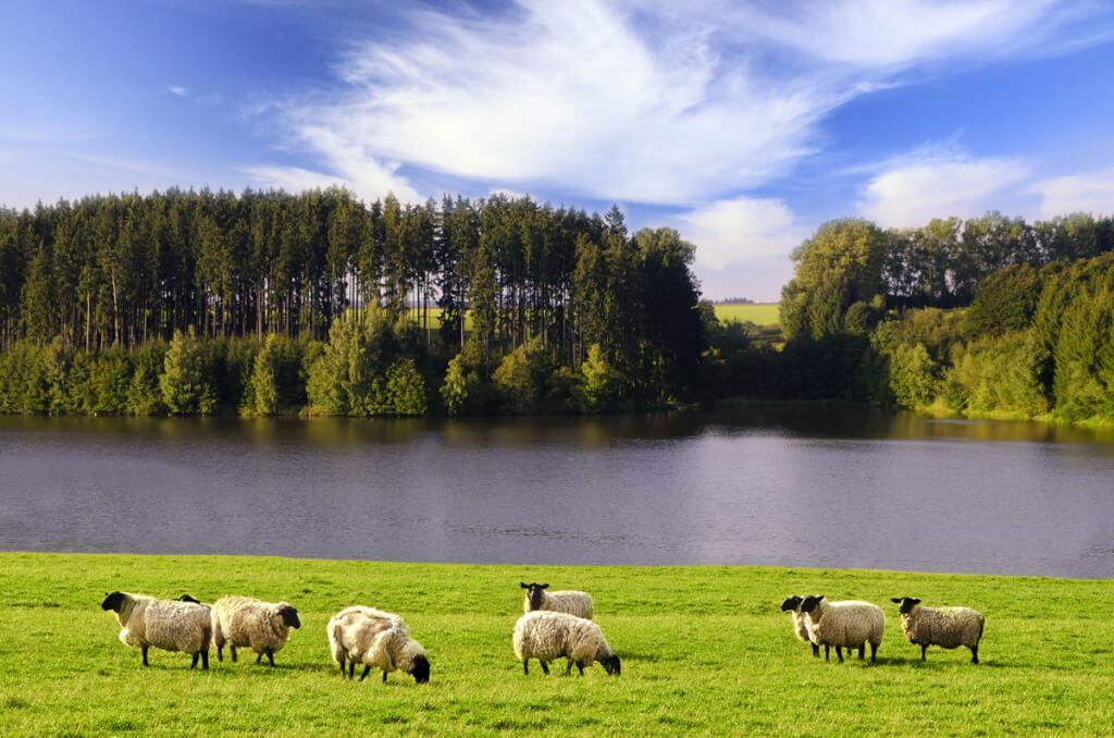 ¿Más árboles o más ovejas?  por Luis Nieto