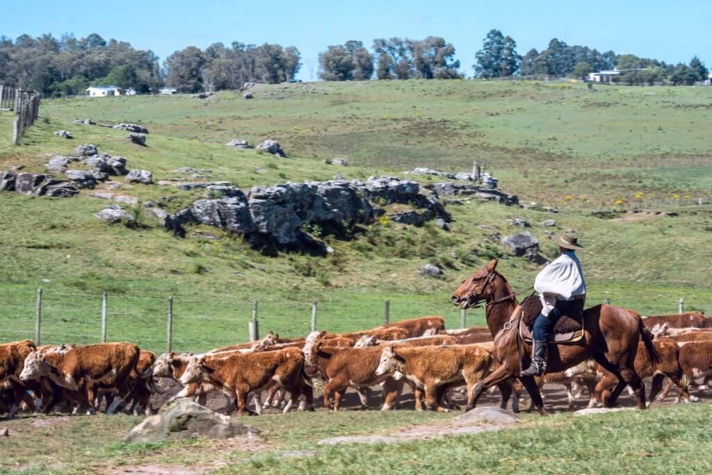 Agricultura industrial y Uruguay natural por Ariel Asuaga