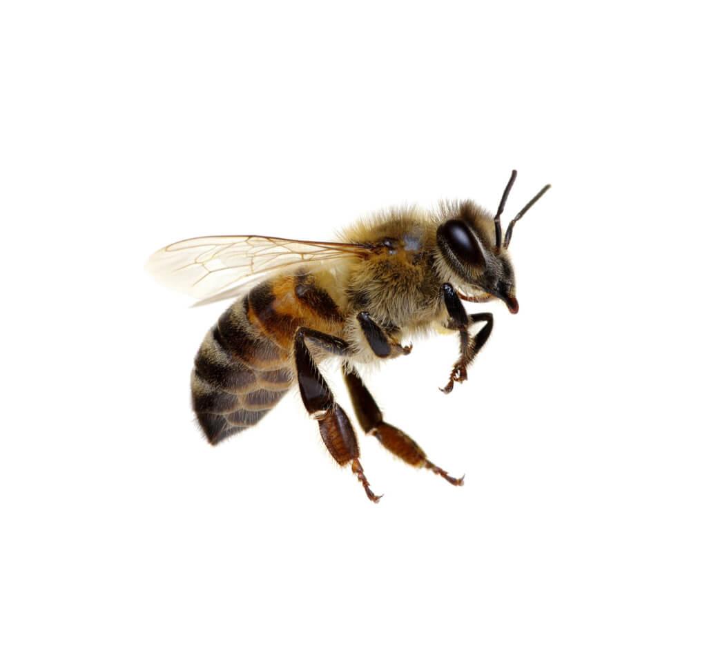 Espalda con espalda junto a las abejas