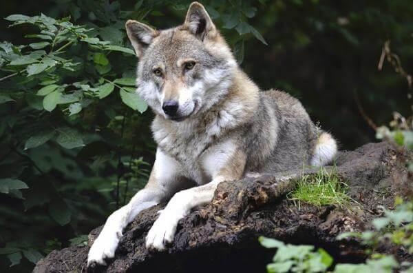 Una de caranchos y otra de lobos por Cristina Morán